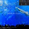 沖縄美ら海水族館の割引料金はいくら?割引クーポン情報【厳選6クーポン】